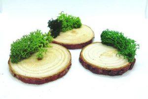 base-tronco-musgo-soporte 1