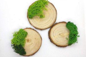 base-tronco-musgo-soporte 2